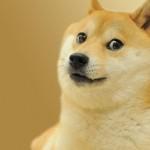 doge funny
